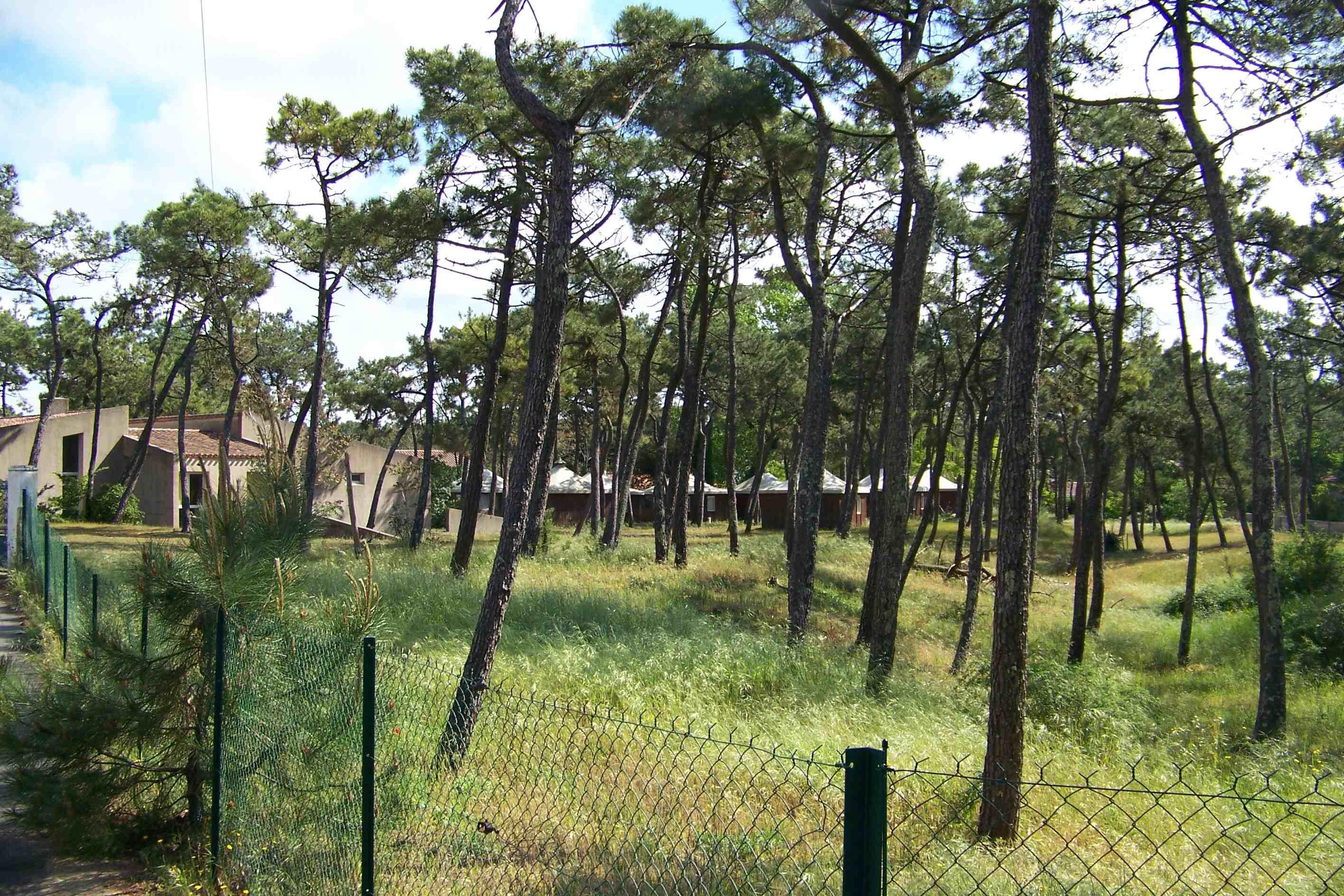 Grière mai 2007 JPEG 3.jpg
