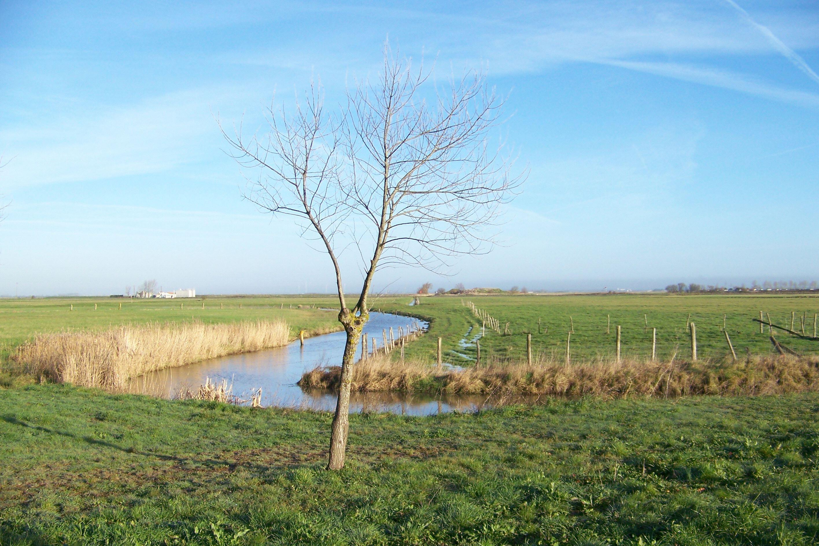Le Marais Tranchais JPEG 6.jpg