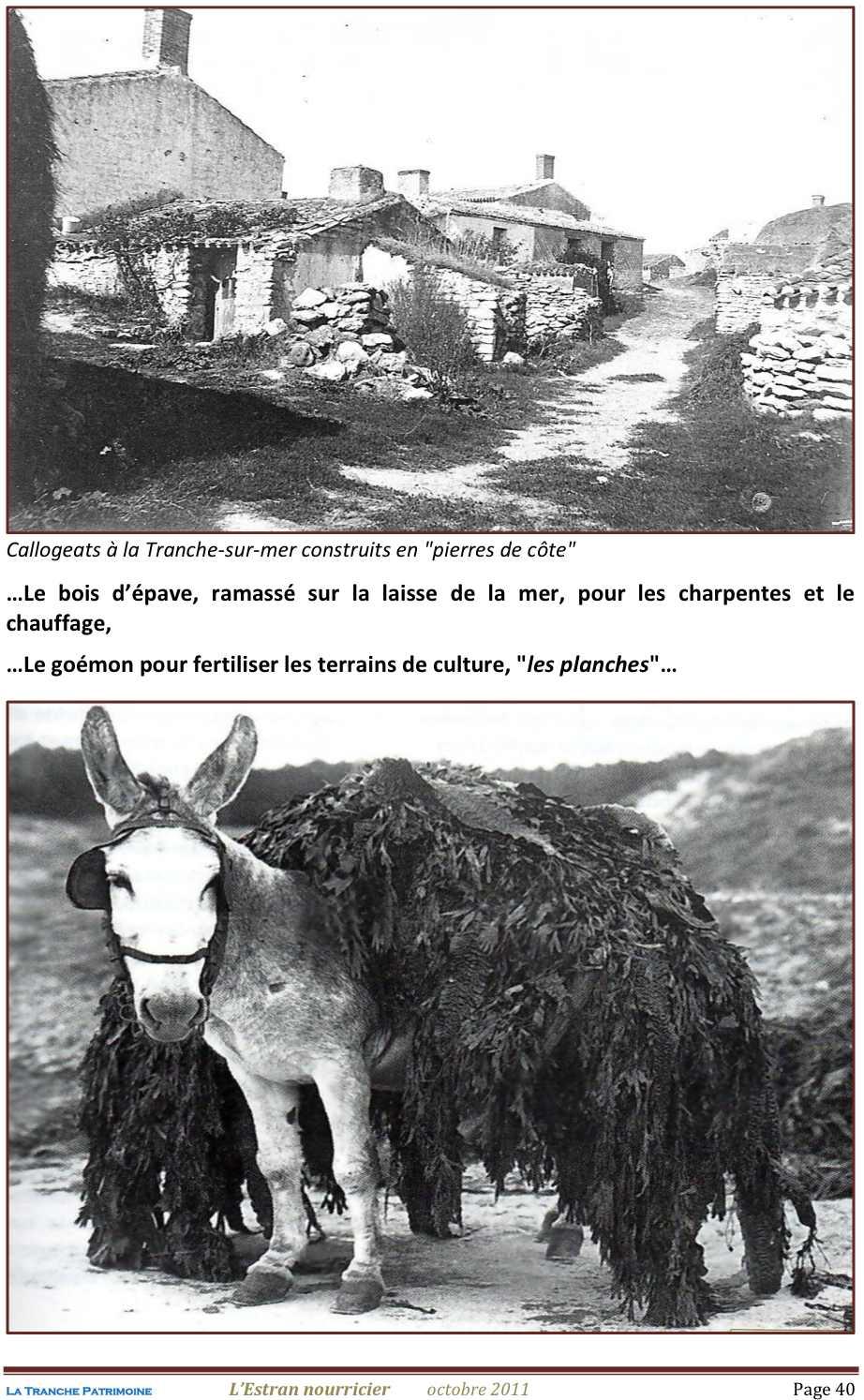 Lestran Nourricier 40 jpeg1.jpg